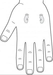 projekcja nerek na lewej dłoni w standardowym systemie odpowiadającym Su Dżok