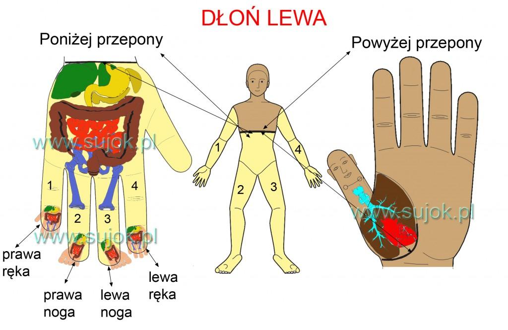 lewa dłon