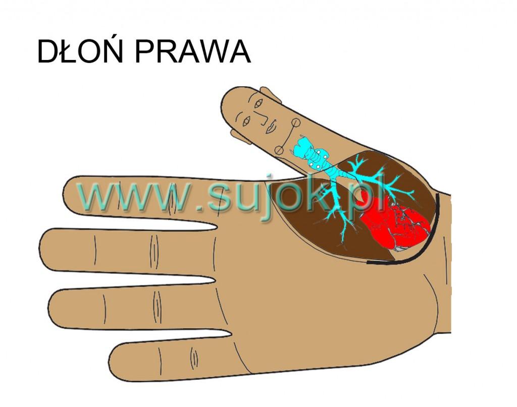 prawa dłoń powyżej przepony