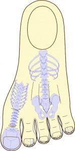 kregoslup-w-systemie-standardowym-na-stopie
