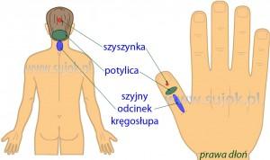 obszary-odpowiadajace-potylicy-szyjnemu-odcinkowi-kregoslupa-i-szyszynce1